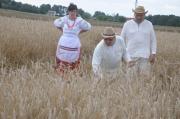 XVI Turniej Żniwowania Metodami Tradycyjnymi - Złota Kosa 2016