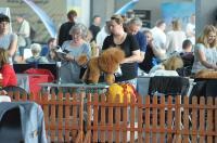 XXXVII Międzynarodowa Wystawa Psów Rasowych w Opolu - 8113_foto_24opole_239.jpg