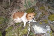 Psa przywiązali do kamienia łańcuchem i odjechali - 20200213151856_piesek_1_0.jpg