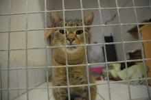 Schronisko zachęca do sterylizacji bezdomnych zwierząt
