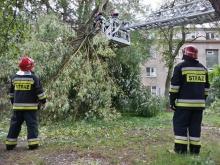 Wichura uszkodziła dziesiątki drzew w regionie