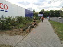 24 drzewa wycięto przy ul. Sandomierskiej
