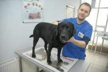Jak pomóc psu przetrwać sylwestrową noc?