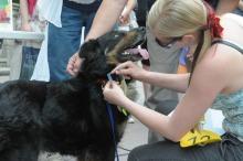 Bella została najpiękniejszym psem parady.