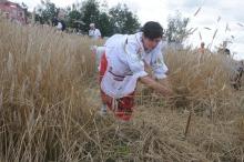 Dziewięć drużyn walczyło w zawodach w żniwowaniu metodami tradycyjnymi