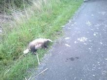 Kto sprząta martwe zwierzęta w mieście? Interwencja czytelniczki.