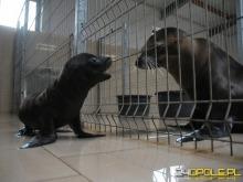Poznaj imię uchatki kalifornijskiej urodzonej w opolskim zoo!