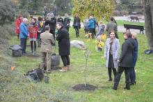 6 wiśni posadzono na Placu Wolności w Opolu.