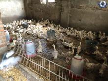 Gospodarz hodował zwierzęta w karygodnych warunkach. Interwencja TOZ i kryminalnych