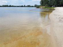 kąpielisko czeka na komunikat, że sinice nie są już obecne
