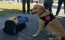 Mieszkaniec Kędzierzyna- Koźla zatrzymany z kilogramem amfetaminy