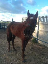 Jest akt oskarżenia wobec pary, która znęcała się nad koniem i 17 psami w Ligocie Prószkowskiej