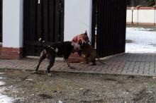 Grzywna za puszczenie psa bez smyczy i kagańca może wynosić nawet 5 tys. złotych