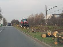 Dlaczego nikt nie powstrzymał wycinki drzew przy ulicy Marka z Jemielnicy?