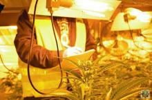 Policja zlikwidowała plantacje marihuany pod Prudnikiem