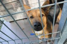Opolskie schronisko dla bezdomnych zwierząt najbardziej potrzebuje... adopcji