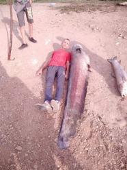WOPR-owcy całą noc łowili kolejne śnięte ryby z Nysy Kłodzkiej