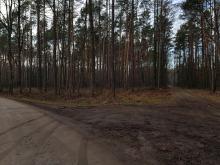 Ministerstwo Środowiska wydało zakaz wejścia do lasu!