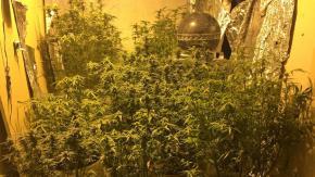 Był poszukiwany do odbycia kary, wpadł z plantacją marihuany na strychu