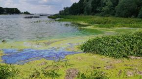 Turyści skarżą się na smród w zatoczkach jeziora dużego w Turawie