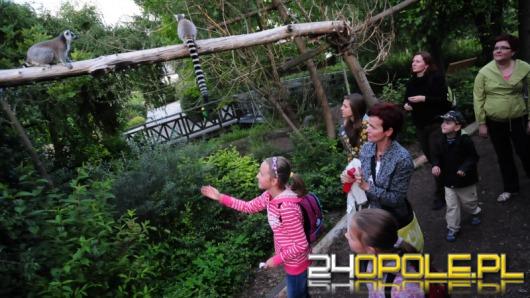 Opolski ogród zoologiczny nocą