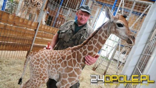 Rekord opolskiego ZOO. 246 tysięcy zwiedzających w 2011 roku