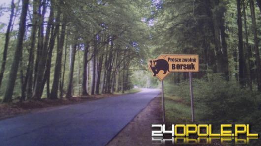 Gmina Murów z borsukiem na tablicach. Konkurs rozstrzygnięty