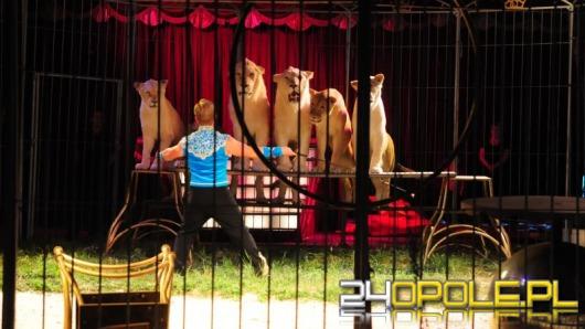 Magia cyrku w Opolu. Egzotyczne zwierzęta i dużo akrobacji