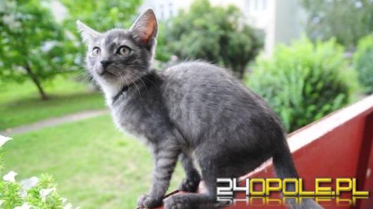 Kot wyrzucony z jadącego samochodu szuka nowego domu