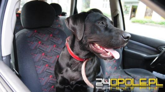 W Opolu wraca podatek od psa. Będzie jednak dobrowolny