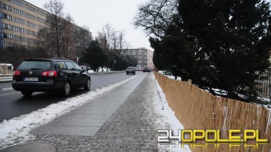 Ratusz dba o zieleń w mieście. Także zimą