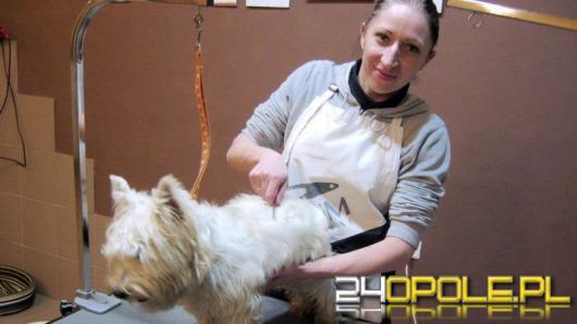 Do Opola zawitała moda na psiego fryzjera