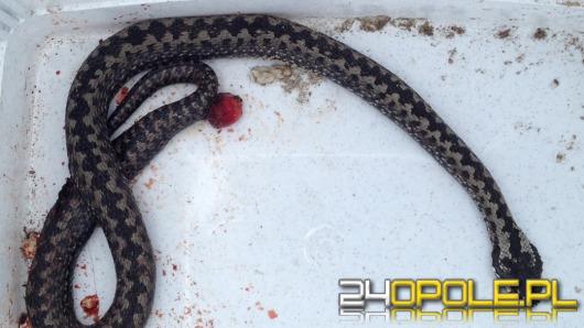 Wąż w sklepie postawił na nogi służby ratownicze