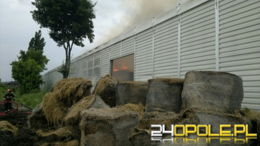 Duży pożar słomy w hali przy ul. Magazynowej