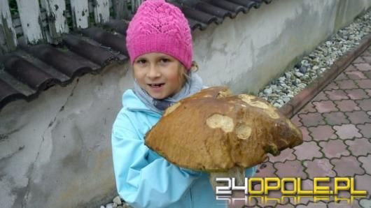 Rekordowe grzybobrania w opolskich lasach