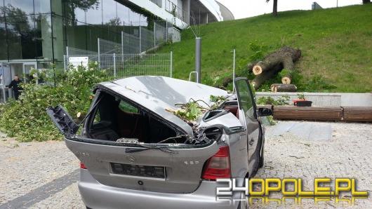 Drzewo spadło na samochód zaparkowany pod amfiteatrem