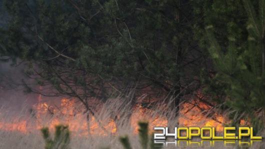 Płoną lasy w gminie Ozimek. Policja szuka podpalacza.
