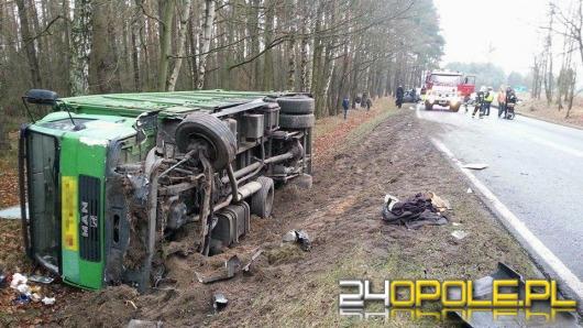 Volkswagen zderzył się z ciężarówką przewożącą świnie