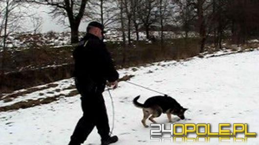 Policyjny pies przez 8 kilometrów tropił złodzieja