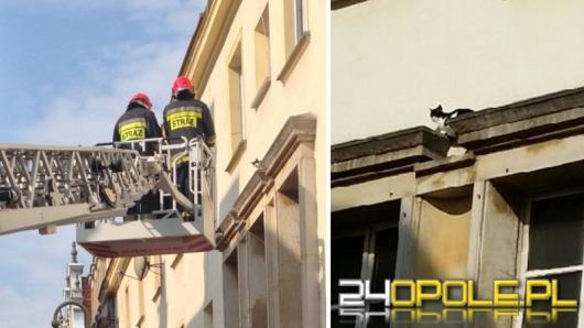 Czy strażacy powinni łapać papugi i ściągać koty z drzew?