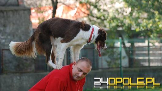 Powstaną trzy parki dla psów w Opolu?