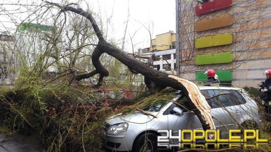 Silny wiatr przewraca drzewa na Opolszczyźnie