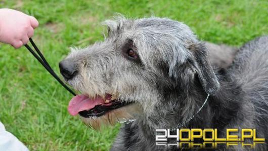 Park dla psów przy ul. Pużaka powstanie jeszcze w tym roku