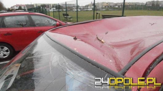 Drzewo przygniotło samochód. Nie ma komu wypłacić odszkodowania.
