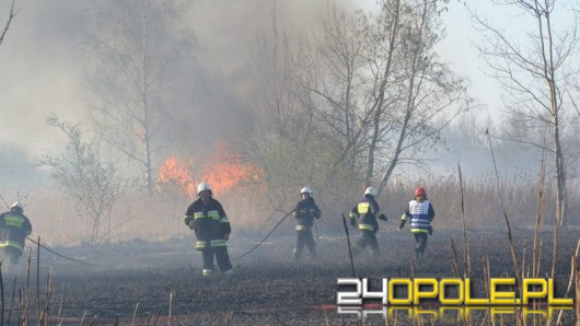 Ogromny pożar traw w Niemodlinie. W akcji samolot i helikopter.