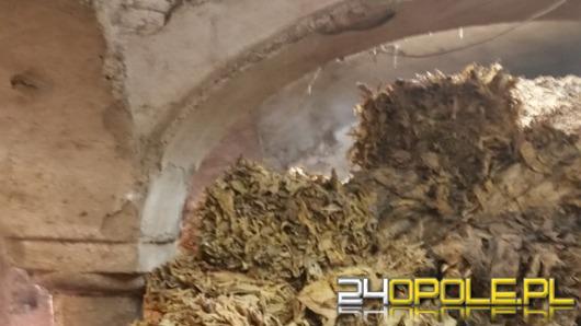 Wpadli na produkcji tytoniu wartego blisko 2 mln zł