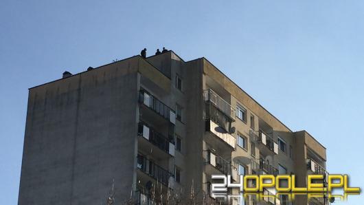 19-latek skoczył z dachu wieżowca na osiedlu Armii Krajowej