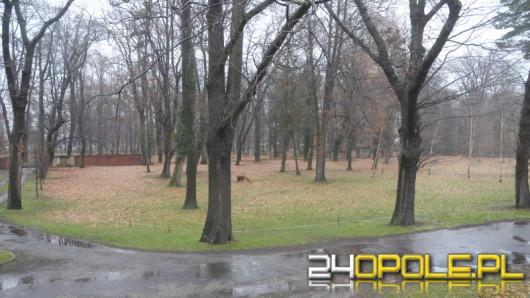 Przy cmentarzu na ul. Wrocławskiej powstanie wybieg dla psów