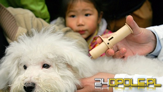 Mieszkańcy Opola bezpłatnie oznakują swojego psa