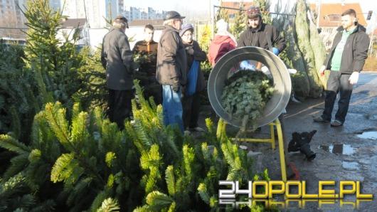 Leśnicy apelują: Kupujcie żywe drzewka na święta